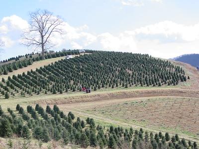 2002-11-30 Christmas Tree