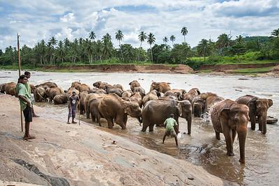 Sri Lanka - March 2008