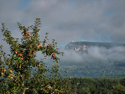 Mohonk Apple Trees