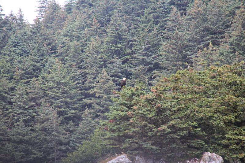 20160719-089 - WEX-Inian Islands-Skiff Tour-Bald Eagle.JPG