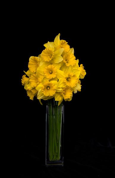 Daffodils032018-104.jpg