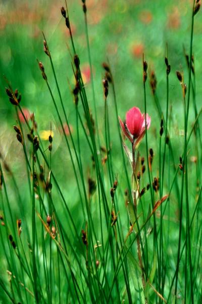 amh FLOWERS (1100).jpg