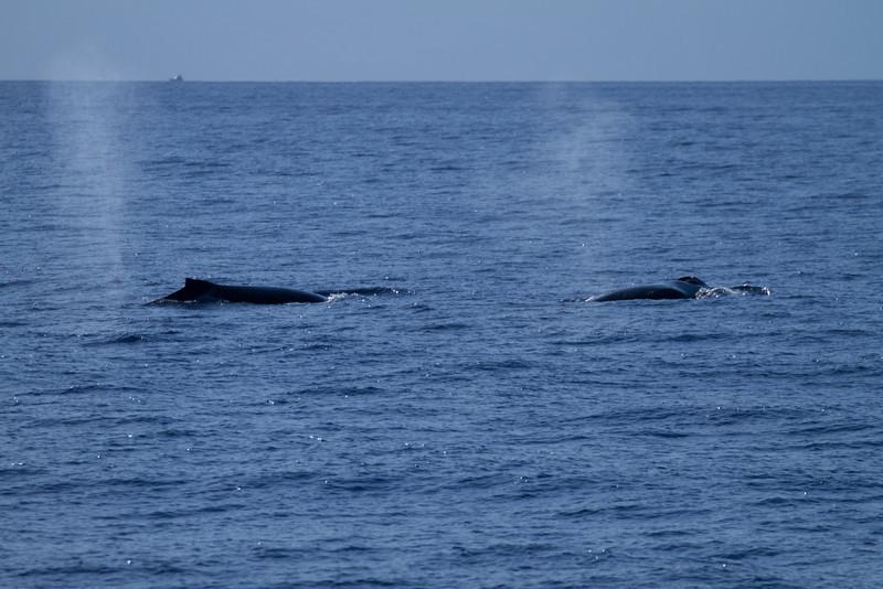 Hawaii2012-1170.jpg