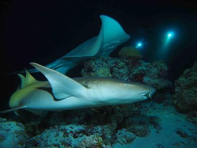 La nuit sous l'eau
