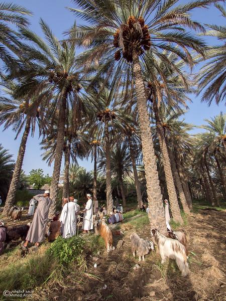 P7230027-Edit-Bidbid- Oman.jpg
