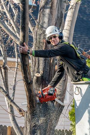 Timmys Tree Service