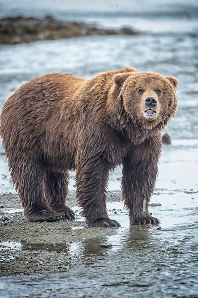 Alaska_2013_FH0T4090-2.jpg