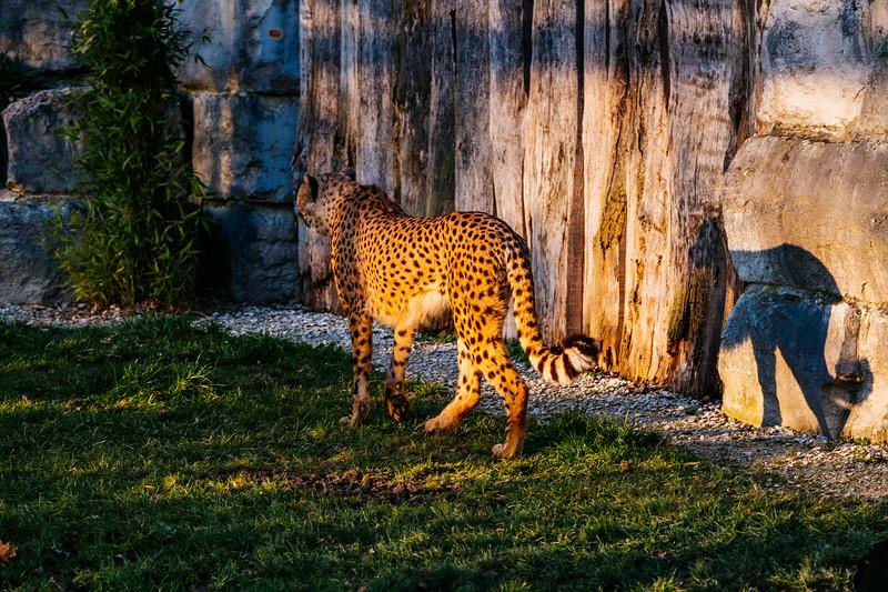 Tonis Zoo-0284.jpg