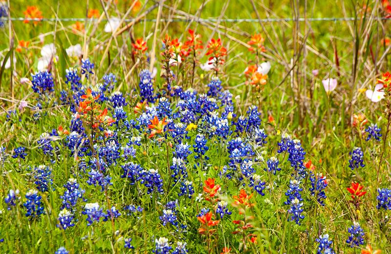 2016_4_9 Texas Wildflower Shoot-8455.jpg