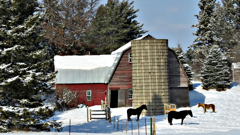WINTER TIME BARN WITH THREE HORSES