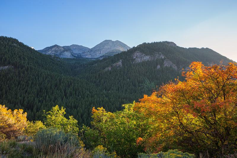 Fall in the Alpine Loop