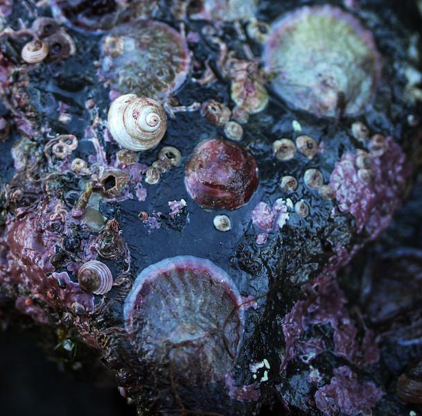 spiralmargarite.jpg