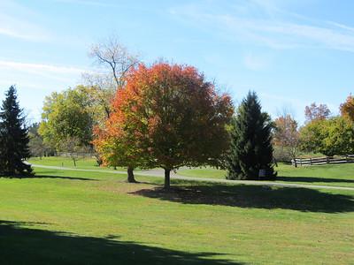 Hidden Lake Gardens, Michigan