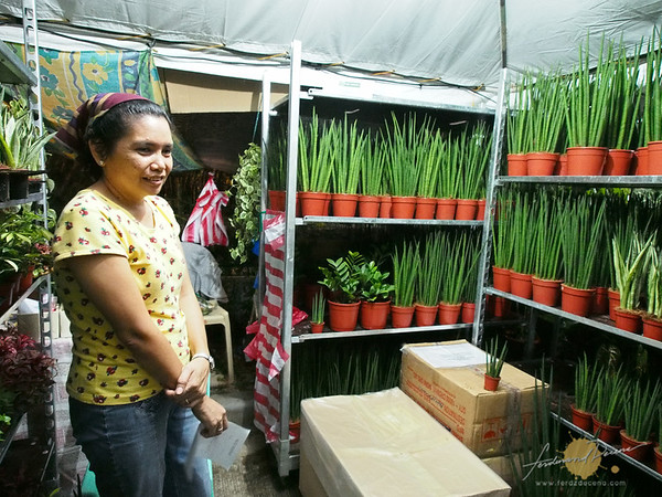 Philippine Orchid Society 2012