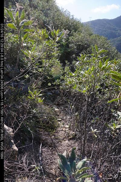 20160124018-Ken Burton Trailwork.JPG