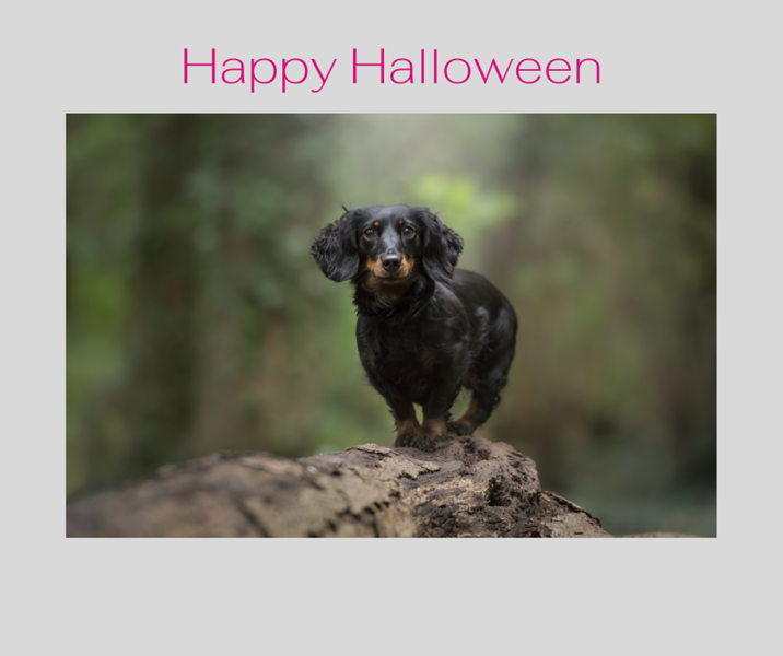 Happy Halloween Website.png
