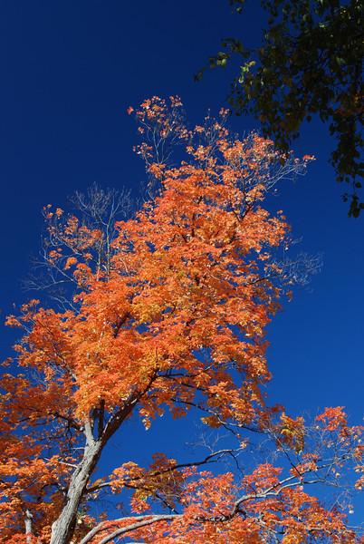Fall leafs 1  .jpg