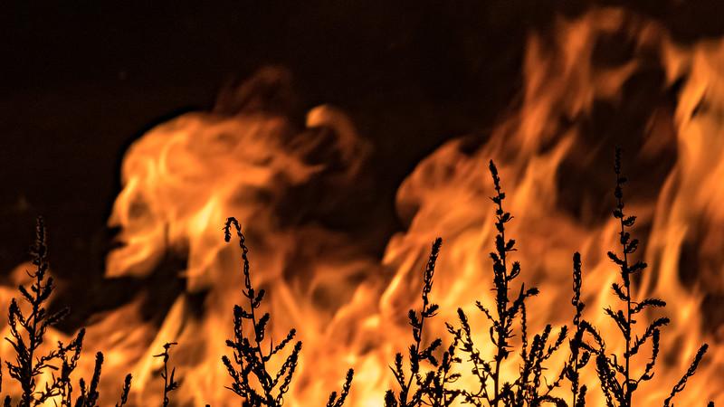 20190817 Campfire-22.jpg