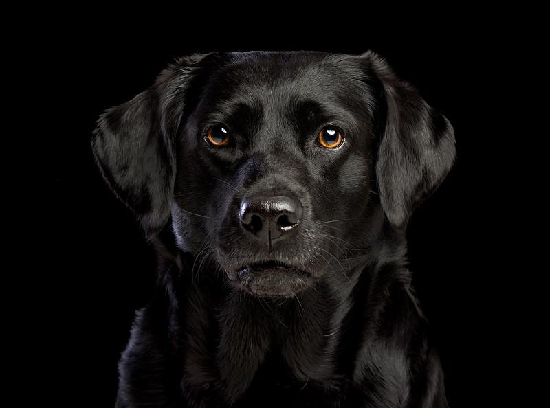 Pets_Jonathan_Yearsley_ (123).jpg