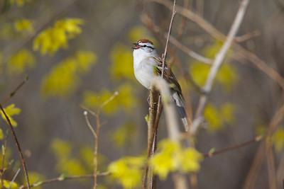 Spring Valley Wildlife