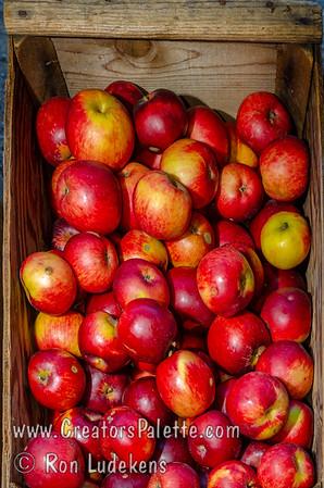 Arkansas Black Apple (Malus sp.)
