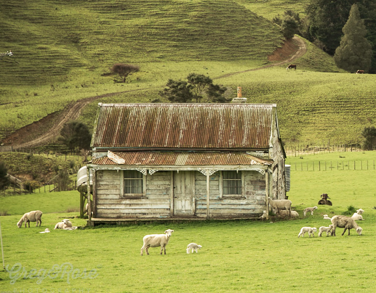 Cottage and Sheep Puhoi