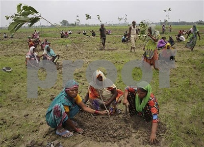 india-state-aims-to-plant-a-record-50-million-trees-in-a-day