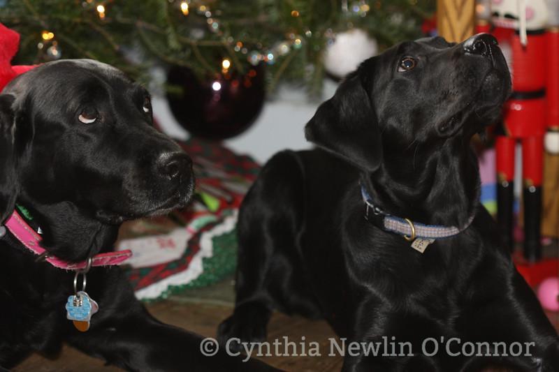 christmas dogs (12).jpg