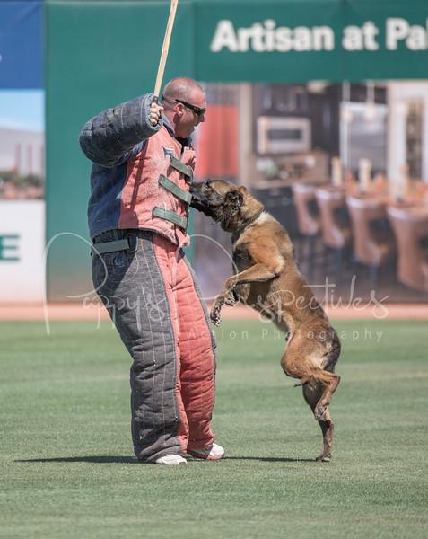 2015 Desert Dog Police K9 Trials (Goodyear, AZ.)