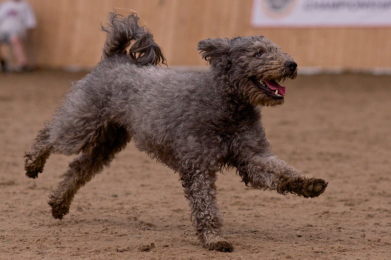 small dog final 1250.jpg