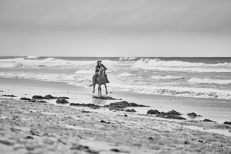 _DSC20850175@Catherine Aranda-LearnedOceanMeadowview©CAL. 1.jpg