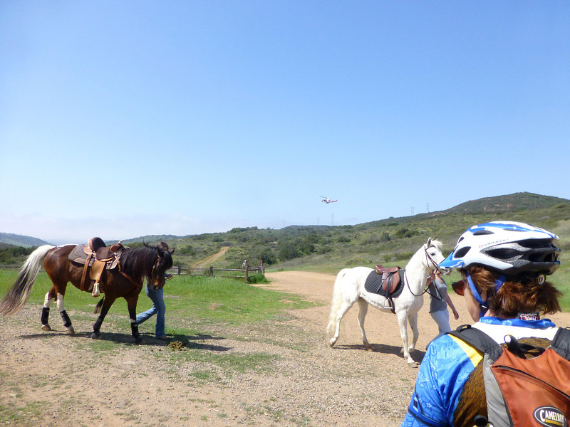 Horses, helicopter