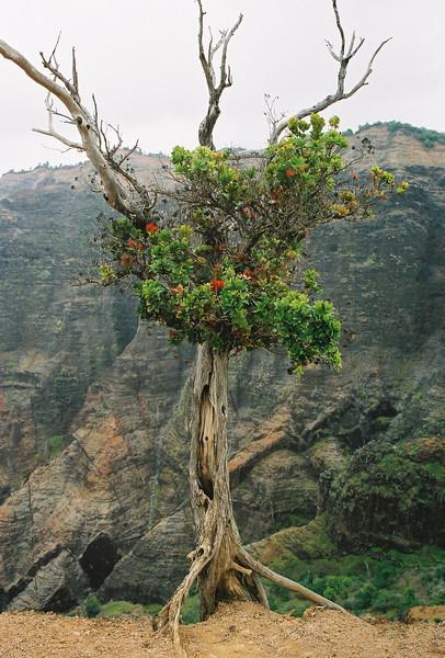 Hawaii-590.jpg
