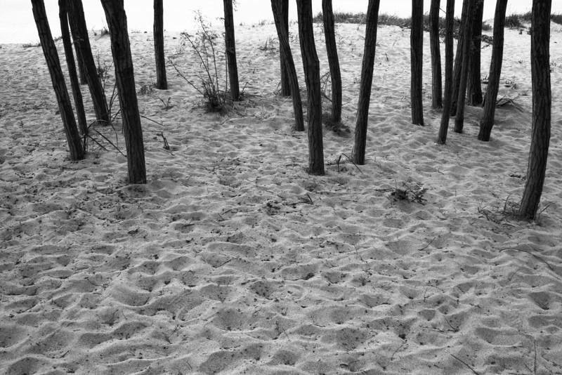 070518-014BW (Tree Trunks, Dunes).jpg