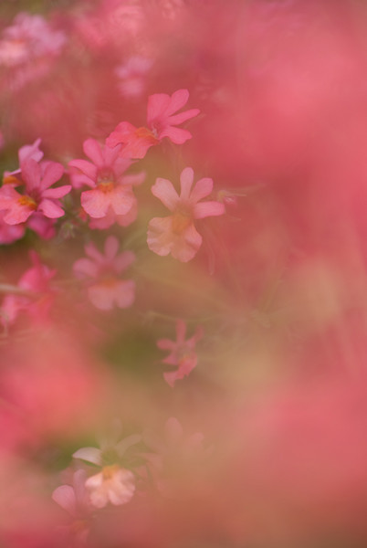 red-dream.jpg