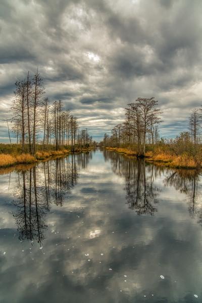 Okeefenokee Swamp 2020-13.jpg