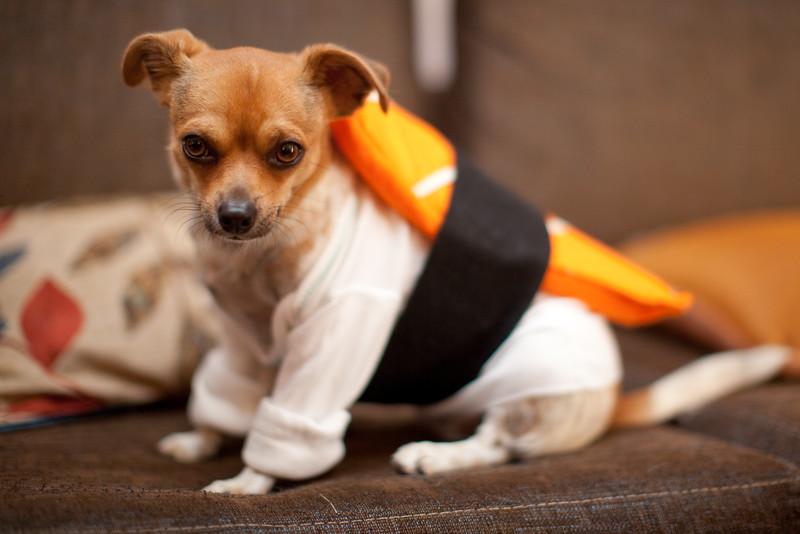 Dog-sushi-halloween-35.jpg