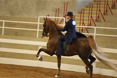 30. ASB Five Gaited Show Pleasure