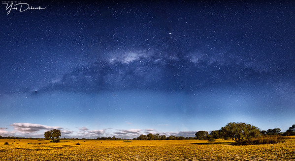 Canola Fields and The Milky Way