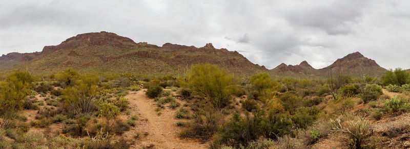 Green Vs Grey In the Desert