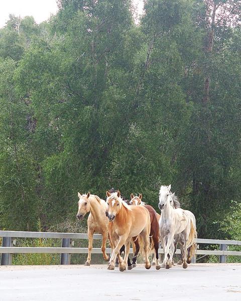 Horse Roundup.jpg