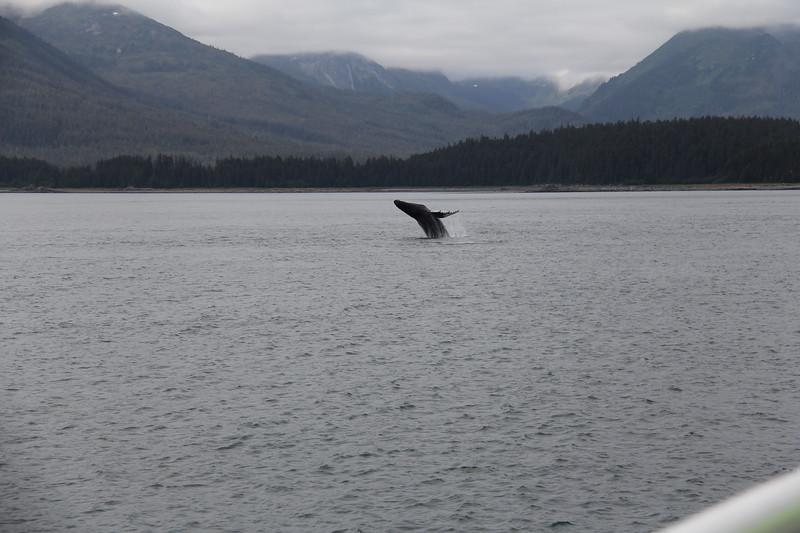 20160717-109 - WEX-Breaching Whale.JPG