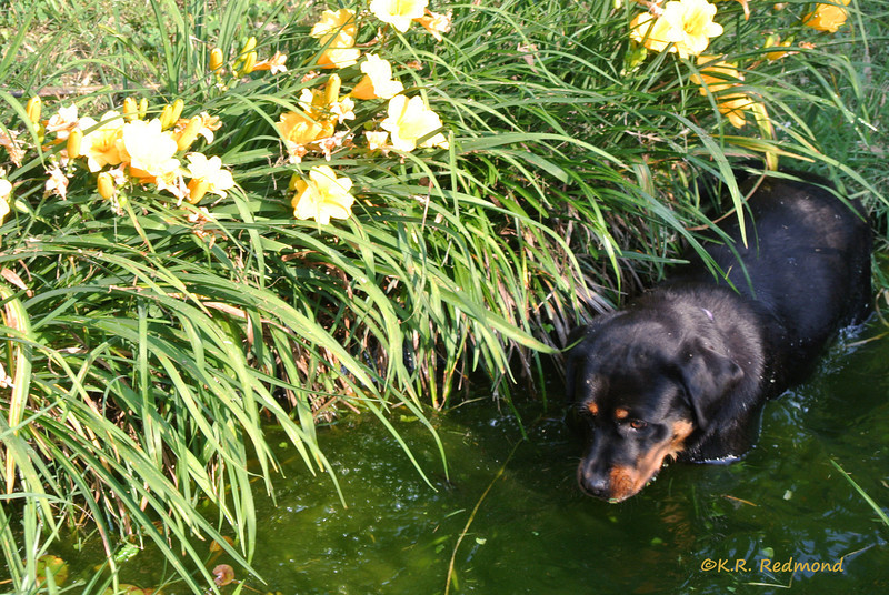 Faith in the Lily Pond