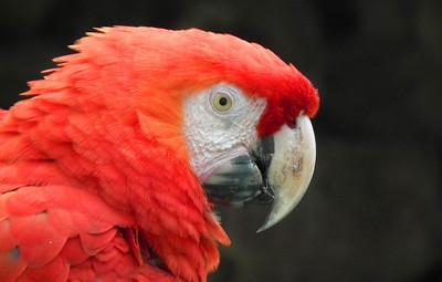 Cuanca Buirds of the Amazon