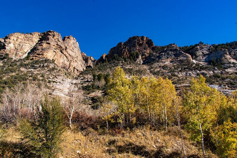 The Aspen Turn to Fall Colors in Lamoille Canyon