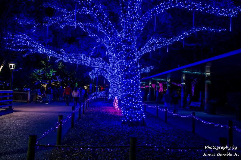 Houston-Zoo-Lights-2858.jpg