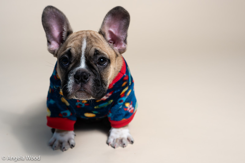 Puppies29.jpg