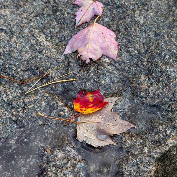 Falls Leaves on Granite.jpg