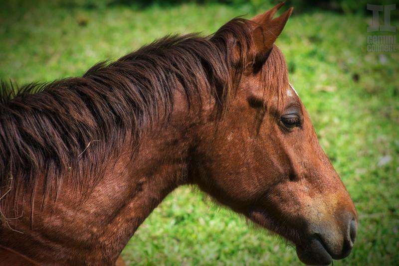 horse-profile.jpg