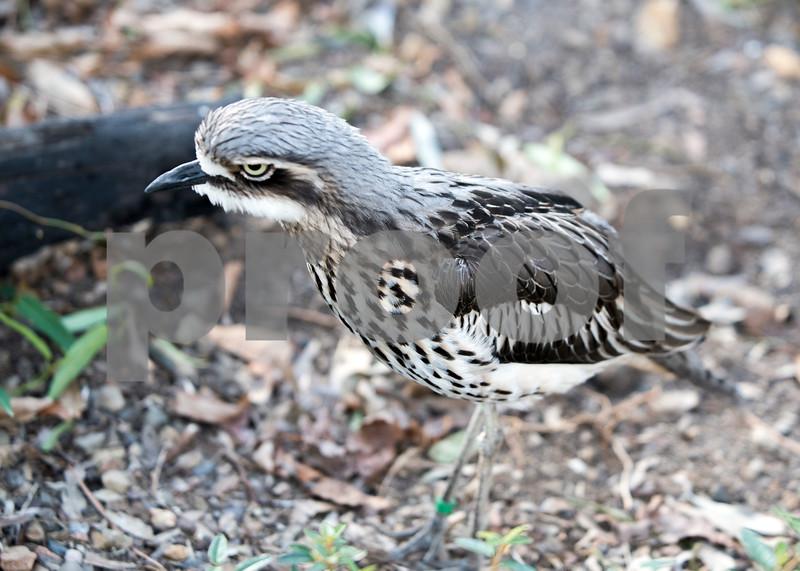 birds 23.jpg